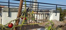 toit terrasse agro écologique réseau Paul Bert Bordeaux