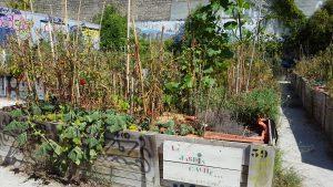 Le jardin caché rue Barreyre aux Chartrons va disparaître Bordeaux