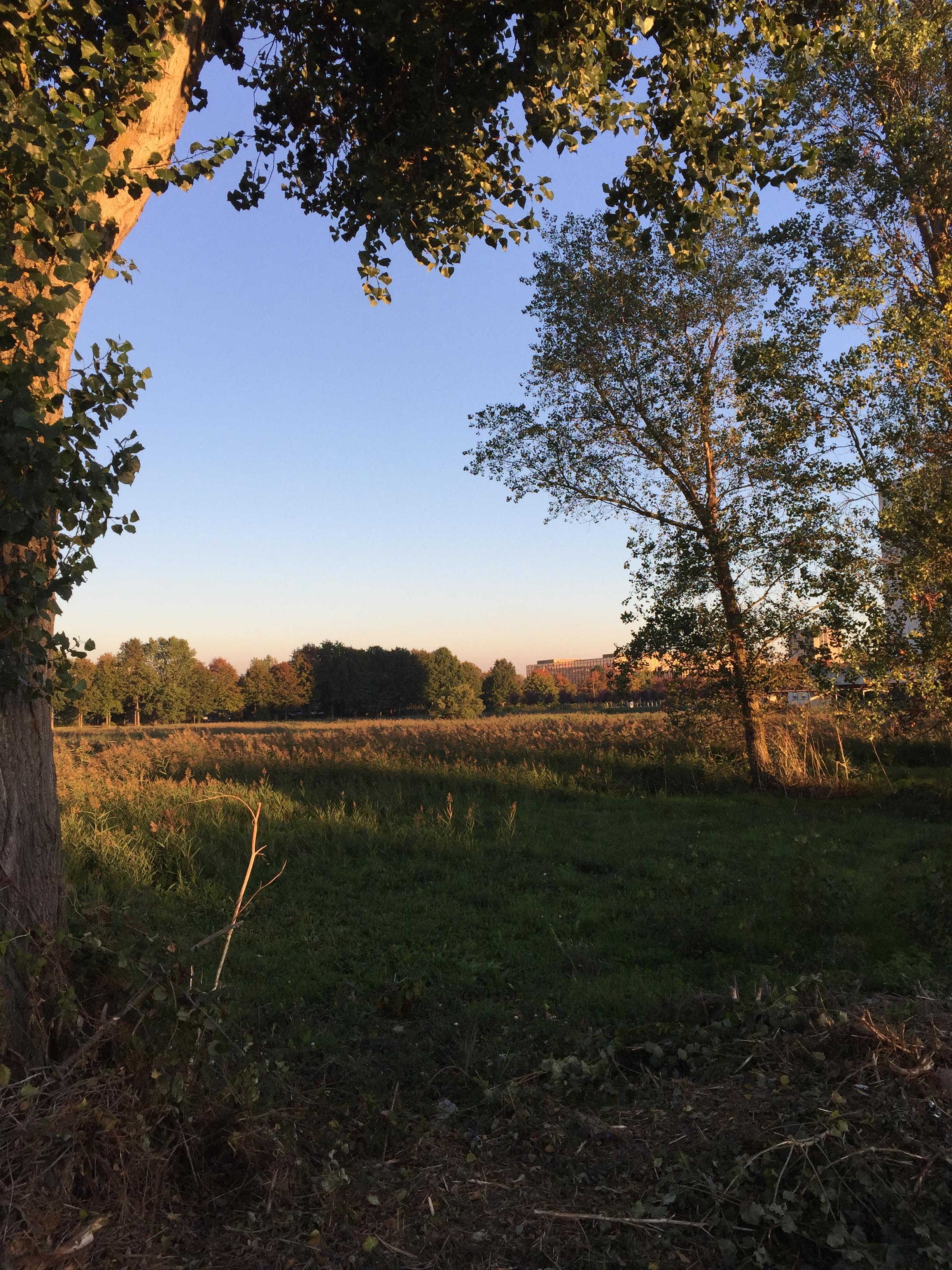 La Jallère, dernière zone humide de Bordeaux menacée par l'urbanisation