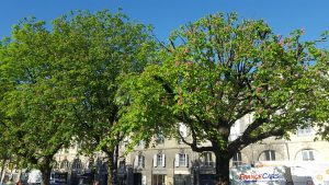 Les marronniers de la Place Gambetta - Bordeaux